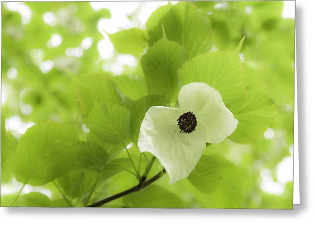 Handkerchief Greeting Cards - Handkerchief Flower Greeting Card by Amanda And Christopher Elwell