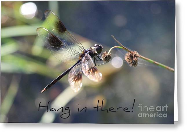 Can Do Greeting Cards - Hang in There Card Greeting Card by Carol Groenen