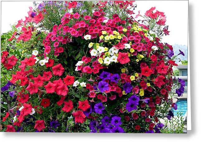 Hanging Baskets Greeting Cards - Hanging Basket Greeting Card by Will Borden