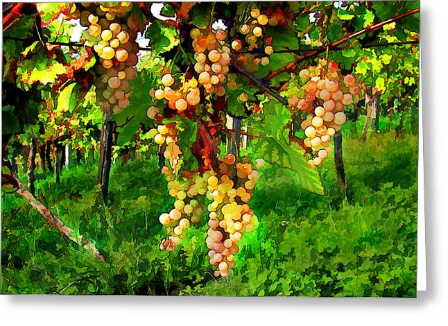 Hanging Grapes On The Vine Greeting Card by Elaine Plesser