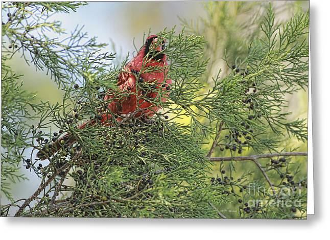 Hiding Greeting Cards - Hanging In The Cedar Greeting Card by Deborah Benoit