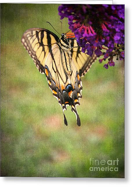 Tiger Swallowtail Digital Art Greeting Cards - Hanging On Greeting Card by Darren Fisher