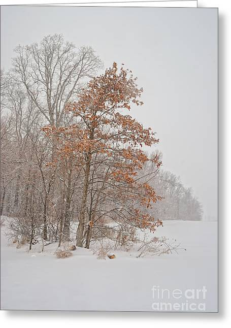 Snow-covered Landscape Greeting Cards - Hanging On Greeting Card by Pamela Baker