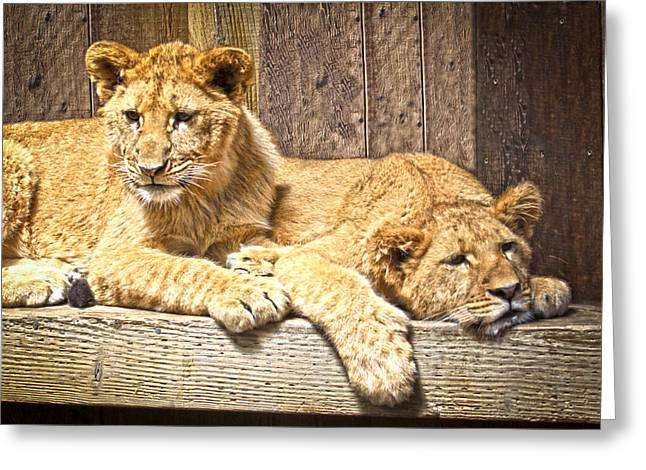 Growling Greeting Cards - Hanging Out Greeting Card by Steve McKinzie
