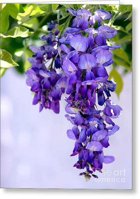 Florida Flowers Greeting Cards - Hanging Purple Passion Greeting Card by Sabrina L Ryan