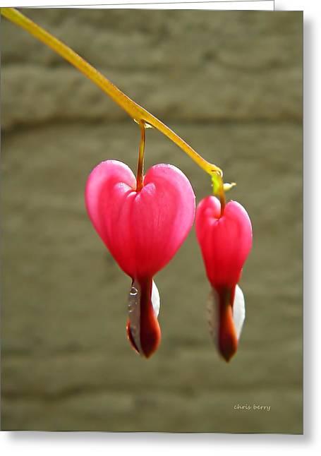 Bleeding Kansas Greeting Cards - Hanging Together Greeting Card by Chris Berry