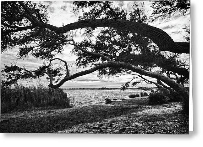 Watermelon Greeting Cards - Hanging Tree Greeting Card by Michael Thomas