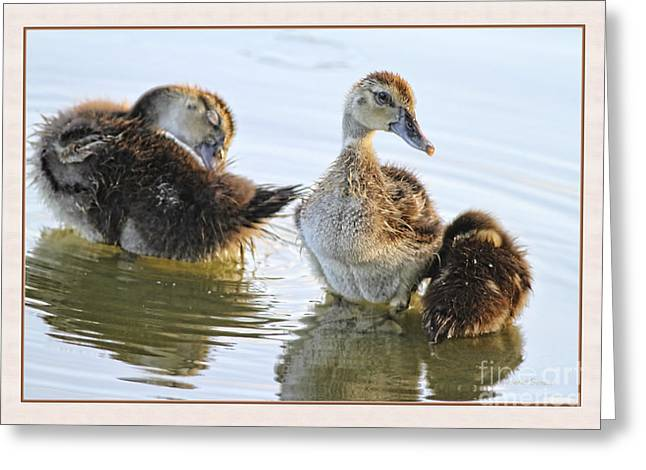 Ducklings Greeting Cards - Hanging With The Buds Greeting Card by Deborah Benoit