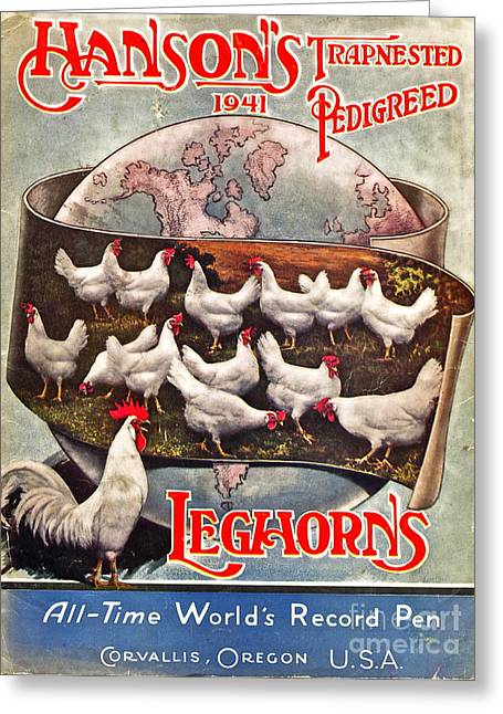 White Chicken Greeting Cards - Hansons Leghorns Greeting Card by Gwyn Newcombe