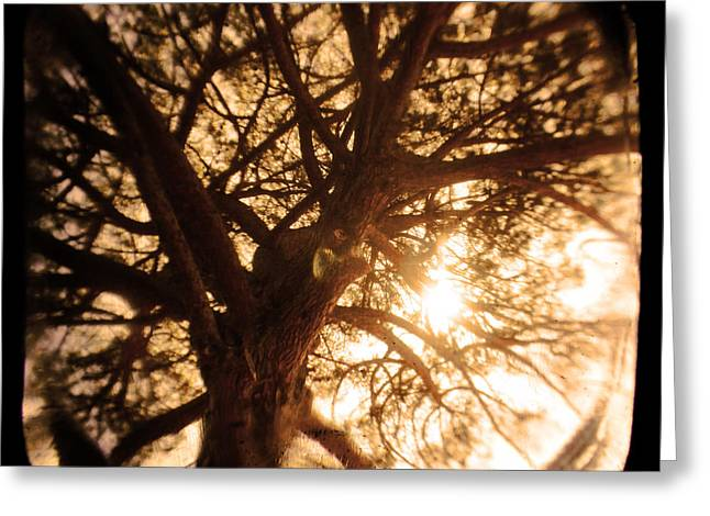 Tall Tree Greeting Cards - Happiness Lives Greeting Card by Andrew Paranavitana