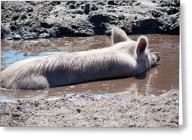 Porcine Animal Greeting Cards - Happy As A Pig In The Mud Greeting Card by Kenneth Albin