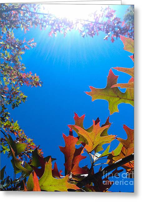 Happy Autumn Greeting Card by CML Brown