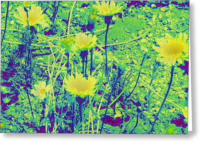 Happy Desert Daisies Greeting Card by Claire Plowman
