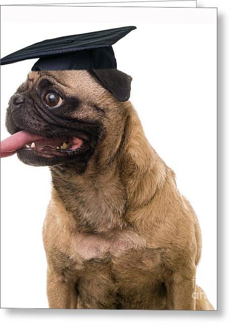 Dog Photographs Greeting Cards - Happy Graduation Greeting Card by Edward Fielding