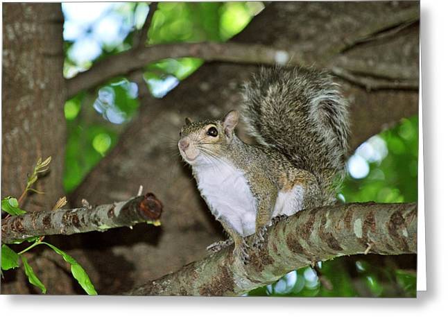 Critter Greeting Cards - Happy Lil Gal Greeting Card by Adele Moscaritolo