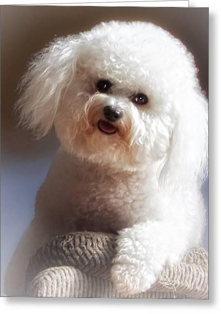 Pup Digital Art Greeting Cards - Happy Greeting Card by Lynn Andrews