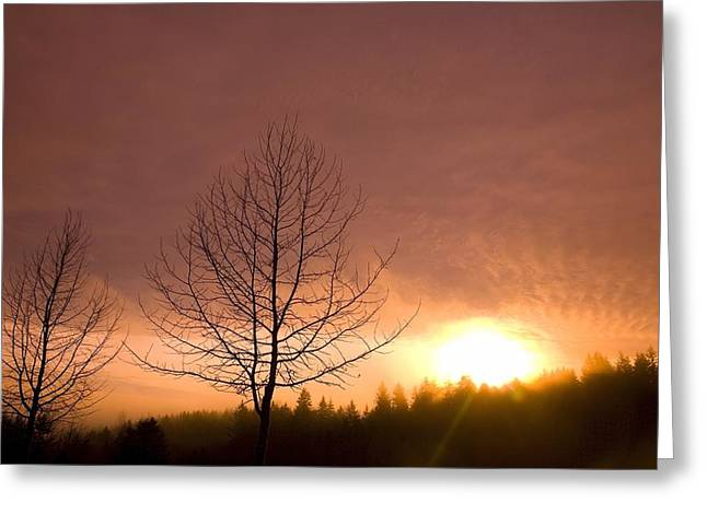 Bare Trees Greeting Cards - Happy Valley, Oregon, Usa Greeting Card by Craig Tuttle