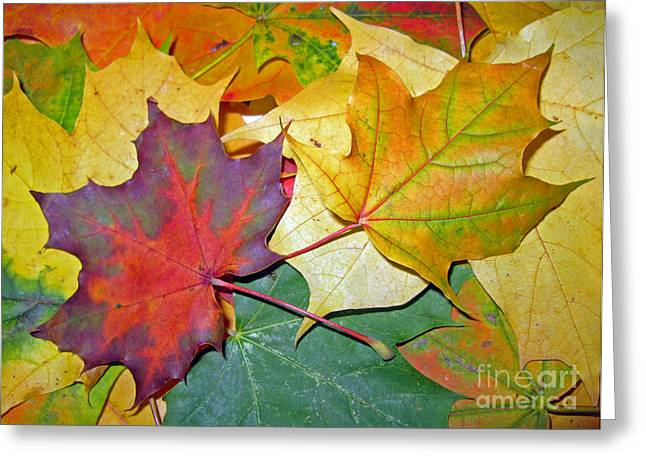 Empower Photographs Greeting Cards - Happy We Are Together Greeting Card by Ausra Paulauskaite