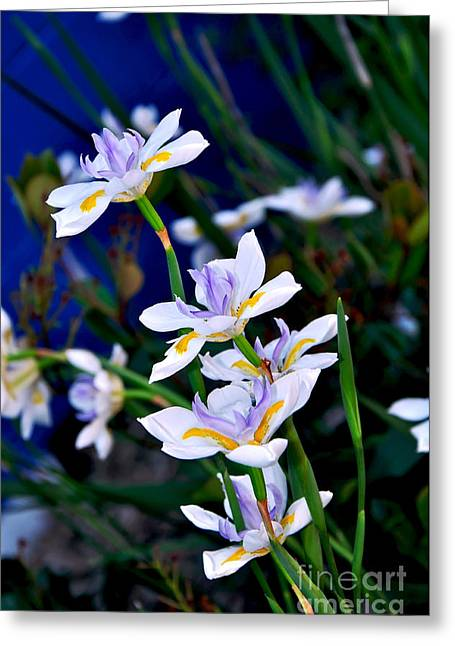 Yellow Stamen Greeting Cards - Happy Wild Iris Greeting Card by Kaye Menner