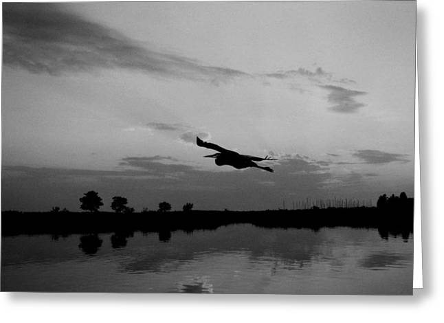 Photogaphy Greeting Cards - Harbor Flight Greeting Card by Skip Willits