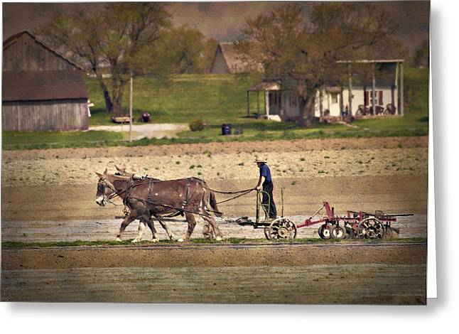Amish Greeting Cards - Hard Working Team Greeting Card by Kathy Jennings