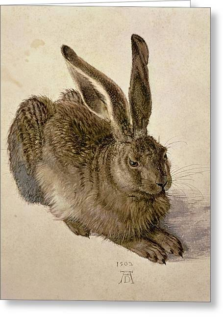 Wild Animals Paintings Greeting Cards - Hare Greeting Card by Albrecht Durer
