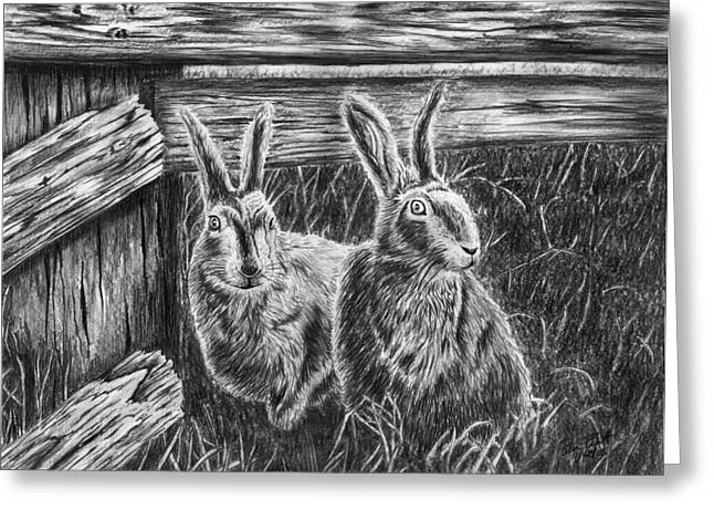Jack Rabbit Greeting Cards - Hare Line  Greeting Card by Peter Piatt
