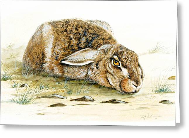 Hare Greeting Cards - Hare trying to hide Greeting Card by Dag Peterson