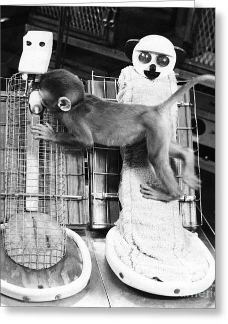 Harlows Monkey Experiment Greeting Card by Photo Researchers, Inc.