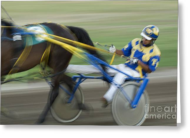 Race Horse Greeting Cards - Harness Racing 2 Greeting Card by Bob Christopher
