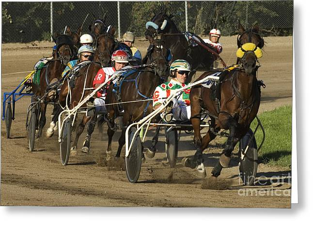 Race Horse Greeting Cards - Harness Racing 9 Greeting Card by Bob Christopher