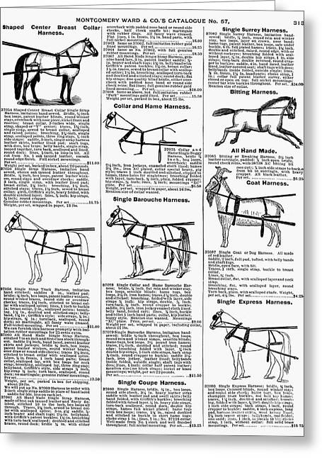 Horse Catalogs Greeting Cards - Harnesses, 1895 Greeting Card by Granger