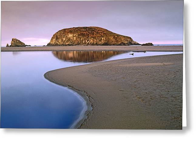 Harris Beach State Park Oregon Greeting Card by Tim Fitzharris