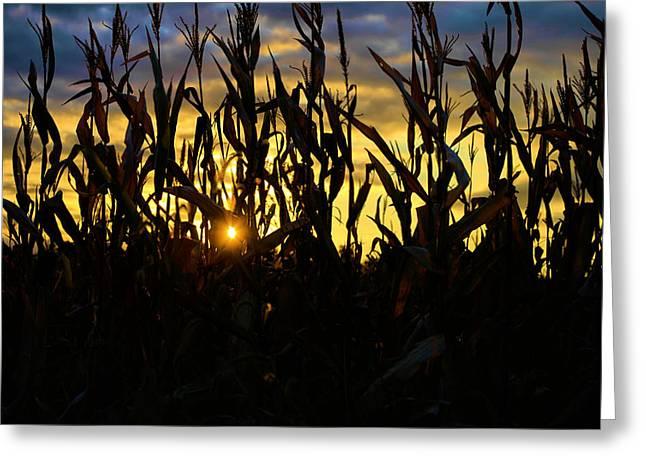 Corn Pyrography Greeting Cards - Harvest Corn Greeting Card by Matt Marsh