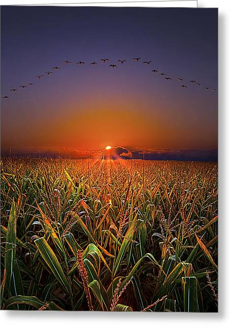 Farming Greeting Cards - Harvest Migration Greeting Card by Phil Koch