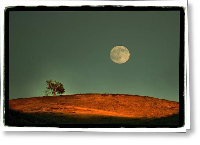 Full Tree Pyrography Greeting Cards - Harvest Moon Calabasas Greeting Card by Noah Brooks