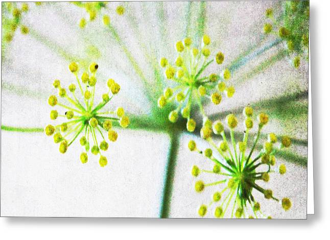 Gardening Mixed Media Greeting Cards - Harvest Starburst 1 Greeting Card by Linda Woods