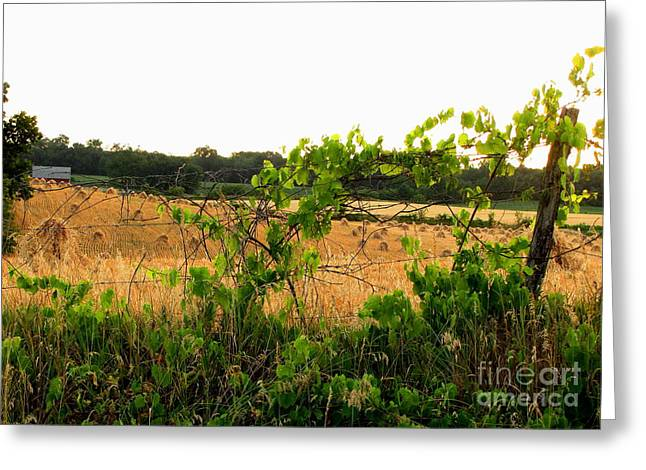 Harvest Time Greeting Card by Marilyn Smith
