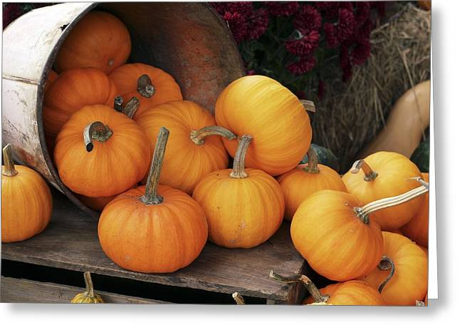 Harvested Pumpkins Greeting Card by Tony Craddock