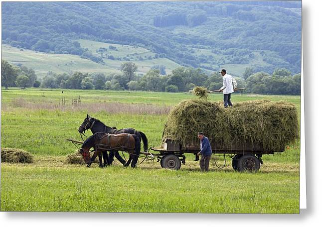Land Use Greeting Cards - Harvesting Using Horses And Cart Greeting Card by Bob Gibbons