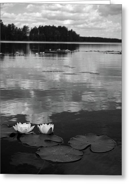 Nymphaea Alba Greeting Cards - Haukkajarvi Water lilies in bw Greeting Card by Jouko Lehto
