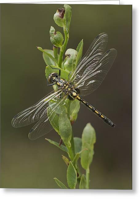Odonata Greeting Cards - Having a Break Greeting Card by Andy Astbury