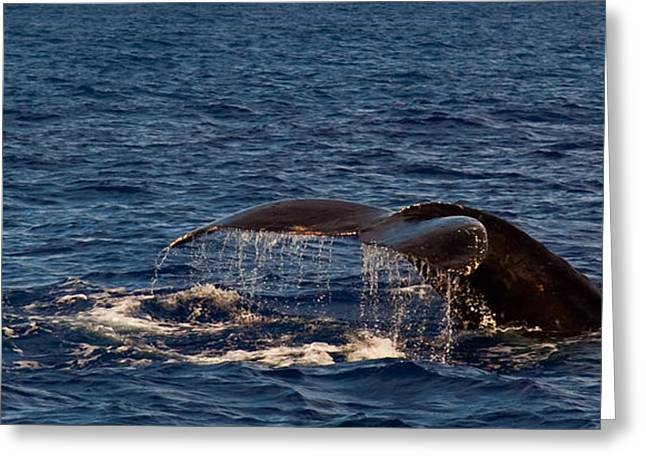 Whale Tail Greeting Cards - Hawaii Humpback Greeting Card by Patrick  Flynn