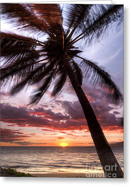 ; Maui Greeting Cards - Hawaiian Coconut Palm Sunset Greeting Card by Dustin K Ryan