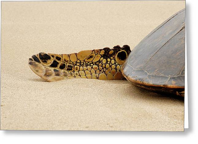 Laniakea Beach Greeting Cards - Hawaiian Green Turtle rear tail fin Greeting Card by Roderick Bley