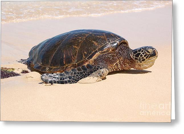 Laniakea Beach Greeting Cards - Hawaiian Honu Greeting Card by Kelly Wade