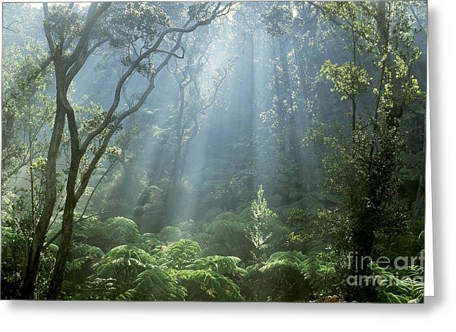 Cibotium Greeting Cards - Hawaiian Rainforest Greeting Card by Gregory Dimijian MD