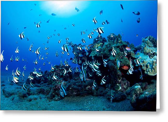 Reef Photos Greeting Cards - Hawaiian Reef Scene Greeting Card by Dave Fleetham - Printscapes