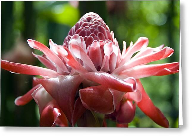 Hawiian Mystery Flower Greeting Card by Chris Ann Wiggins