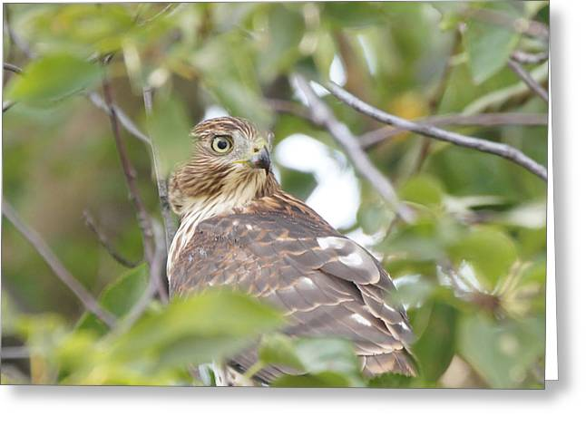 Reflections Of Infinity Greeting Cards - Hawk 9727-1 Greeting Card by Robert E Alter Reflections of Infinity